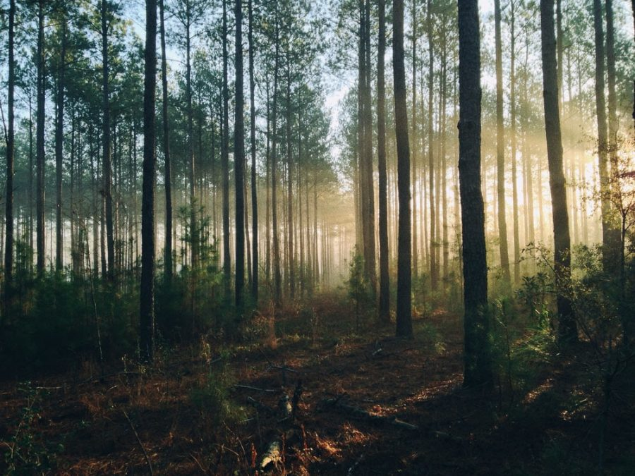Audio Story: Forest of Pain