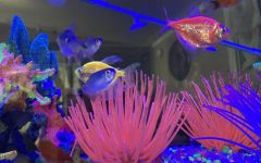 Awesome Fish Tank Facts