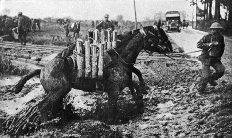 Horses in the World Wars